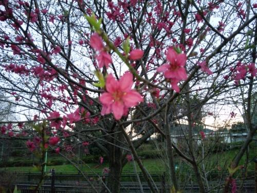 公園で。春ですね